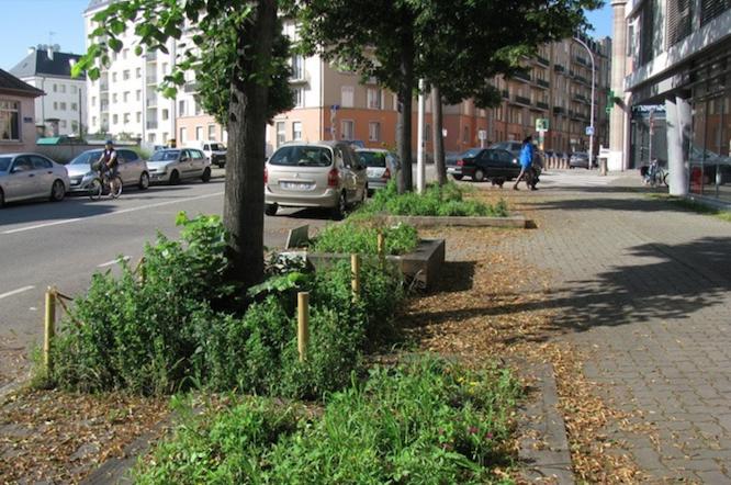 Bacs à adopter, rue de l'Hôpital Militaire à Strasbourg - Strasbourg ça pousse